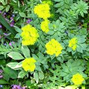 Цветоводство, ландшафтный дизайн, флористика группа в Моем Мире.