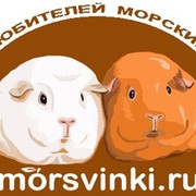 morsvinki.ru group on My World