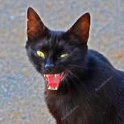 Злобный Кот on My World.